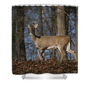 A Wild Deer Caught In Early Morning Shower Curtain