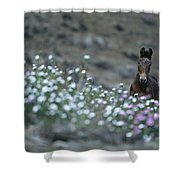 A Wild Horse On A Wildflower Covered Shower Curtain