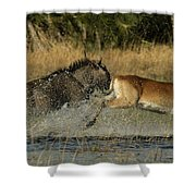 A Wildebeest And A Red Lechwe Leap Shower Curtain