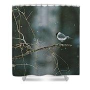 A Willow Tit Parus Montanus Perches Shower Curtain