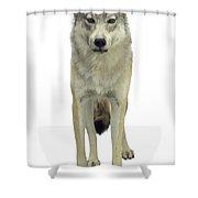 A Wolf Shower Curtain