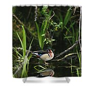 A Wood Duck Reflected In Creek Water Shower Curtain