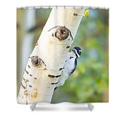 A Woodpeck Behind An Eye Of A Tree Shower Curtain