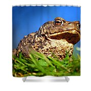 A Worm's Eye View Shower Curtain
