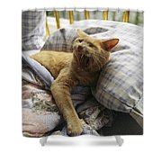 A Yawning Cat Wakes From A Nap Shower Curtain