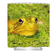 A Yellow Bullfrog Shower Curtain