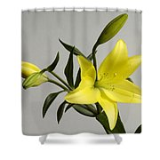 A Yellow Lily Lilium Canadense Shower Curtain