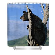 A Young American Black Bear Urus Shower Curtain