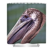 A Young Brown Pelican Shower Curtain
