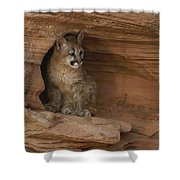 A Young Mountain Lion Rests In A Rocky Shower Curtain