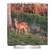 Aah Baby - Deer Shower Curtain