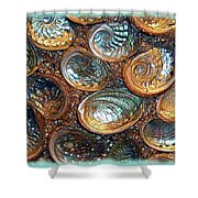 Abalones Shower Curtain by Judi Bagwell