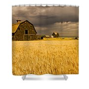 Abandoned Farm, Wind-blown Durum Wheat Shower Curtain