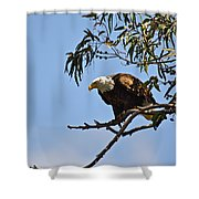 About To Fly Shower Curtain