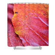 Abstract Dogwood In Autumn Shower Curtain