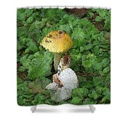 Abstract Mushrooms Shower Curtain