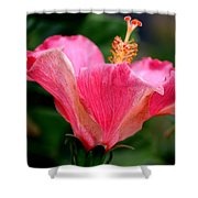 Abundantly Pink Shower Curtain