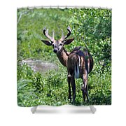 Acadia Buck Shower Curtain
