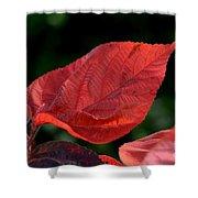 Acalypha Shower Curtain