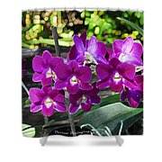 Accented Purple Orchid  Shower Curtain