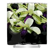 Accented Purple Poster Orchid Fx  Shower Curtain