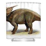 Achelousaurus Horneri, A Prehistoric Shower Curtain