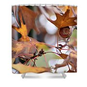 Acorn Hull Shower Curtain