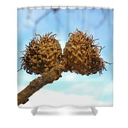 Acorns Have Left The Nest Shower Curtain