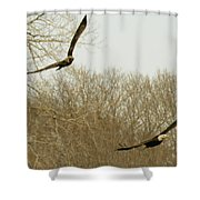 Adult And Immature Bald Eagle Flying Shower Curtain