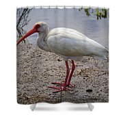 Adult White Ibis Shower Curtain