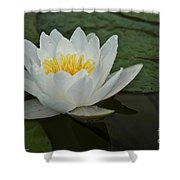 Afloat Shower Curtain