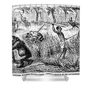 Africa: Ape Hunting Shower Curtain