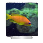 African Anthias Shower Curtain