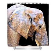 African Babe Shower Curtain