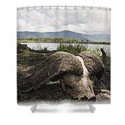 African Cape Buffalo Skull, Ngorongoro Shower Curtain