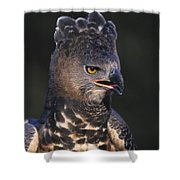 African Crowned Eagle Shower Curtain