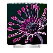 African Daisy Shower Curtain