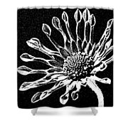 African Daisy In Black And White Shower Curtain