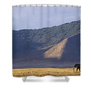 African Elephant In Ngorongoro Crater Shower Curtain