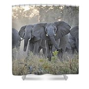 African Elephant Loxodonta Africana Shower Curtain