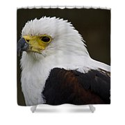 African Fish Eagle 1 Shower Curtain
