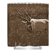 African Grassland Feeder Shower Curtain