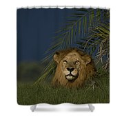 African Lion Resting Near A Palm Shower Curtain