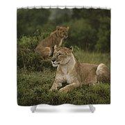 African Lionesses In Masai Mara Shower Curtain