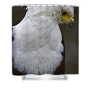 African Sea Eagle 5 Shower Curtain by Heiko Koehrer-Wagner