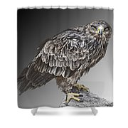 African Tawny Eagle Shower Curtain