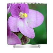 African Violet Flower Shower Curtain