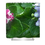 African Violets Intertwined I Shower Curtain