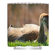 Afternoon Reprieve Shower Curtain