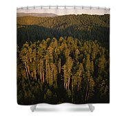 Afternoon Sunlight Bathes Redwood Trees Shower Curtain